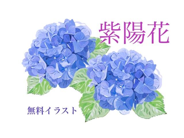 紫陽花の無料イラストのアイキャッチ