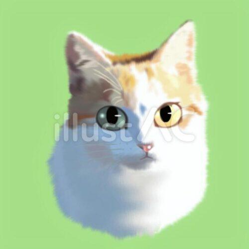 左右で眼の色がちがう猫の顔